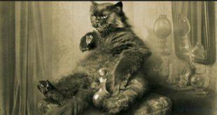 Философия кота о любви к себе